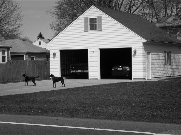 2012-03 Guard Dogs BW.jpg