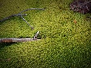 2019-04 Moss.jpg