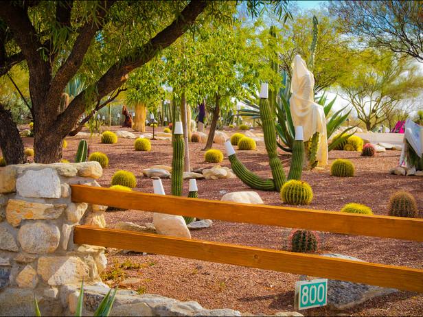 2012-01 Tucson Cold Snap.jpg