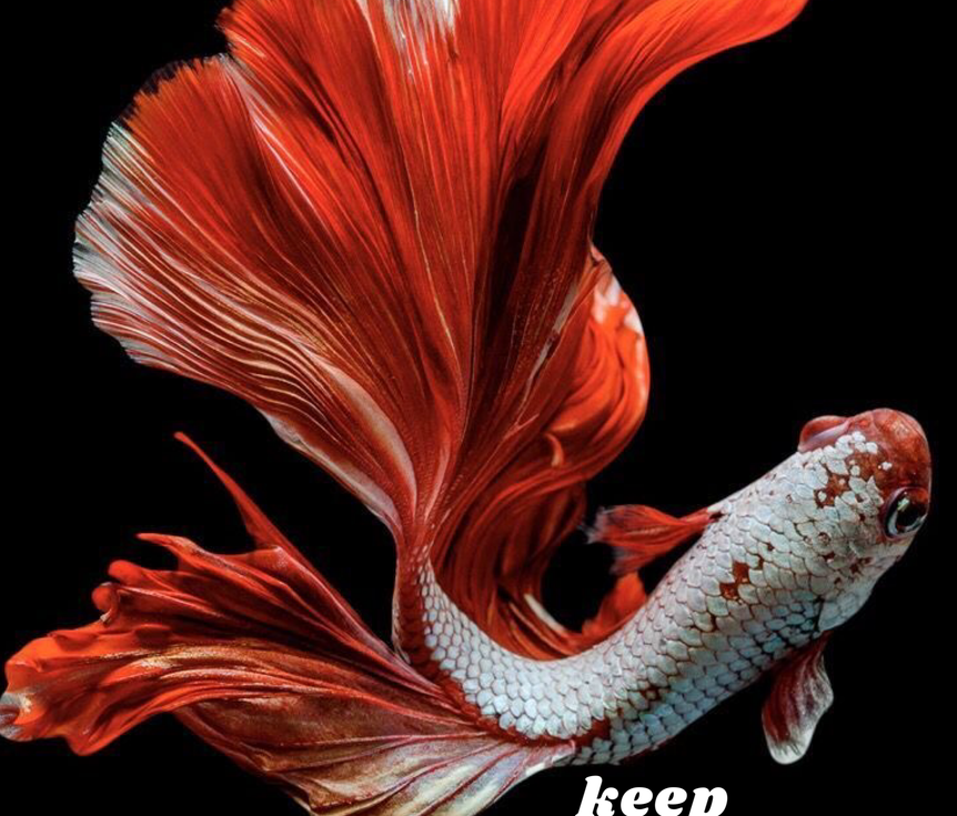 Keep Swimming.