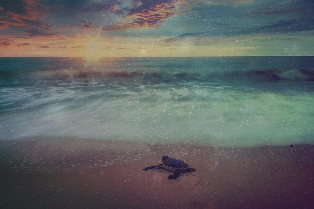 A beira de uma praia com uma tartaruga caminhando no meio da imagem. Ao fundo temos um pôr do sol com algumas nuvens.