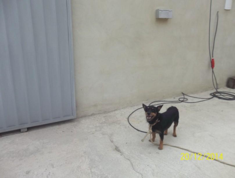 Imagem de um cachorrinho preto em um chão de cimento. Atrás tem um portão de correr branco, uma parede chapiscada, uma fiação correndo solta pelo chão e uma caixinha de correio branca no canto superior direito.