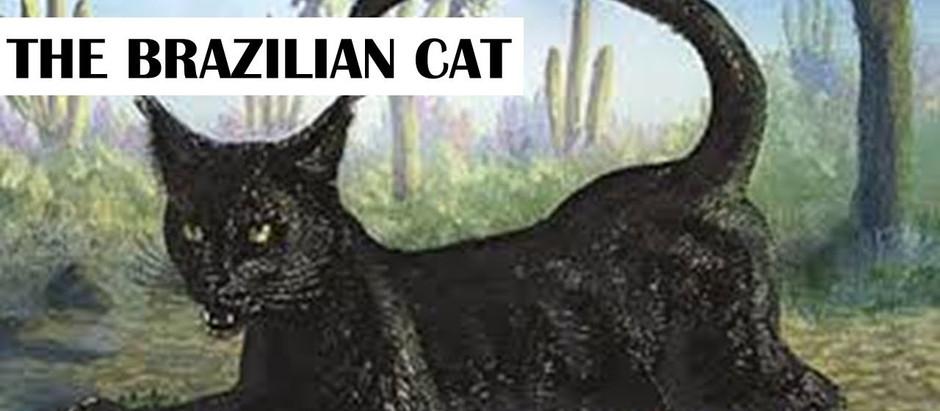 """Resenha: """"O Gato Brasileiro"""" de Sir Arthur Conan Doyle"""