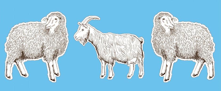 """Resenha: """"Entre Cabras e Ovelhas"""" de Joanna Cannon"""