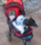 Katya's AniWell - Pet Sitter, Special Needs Animal Care, Hobby-Farm Tending, 24/7 Animal Minder. Insured, Professional 24/7 Care - Perth Region, Hills & Bridgetown/ Bunbury Area