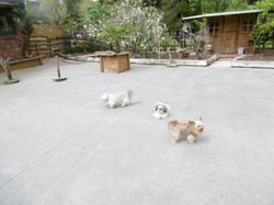 Marnis Four Legged Friends -Dog Stay