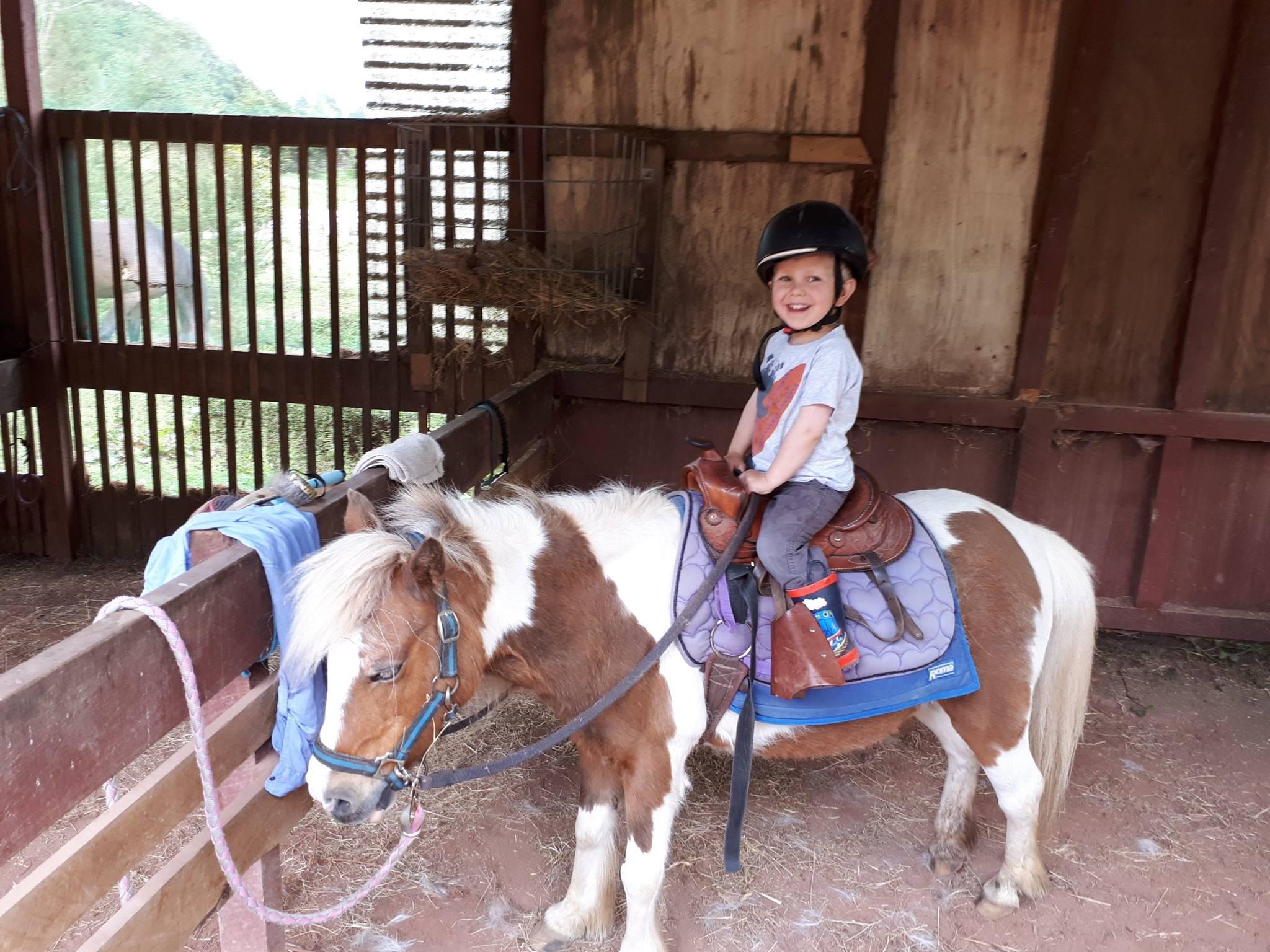 Horses Pic 1
