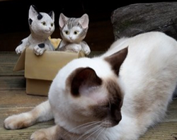 Cats at Marni's