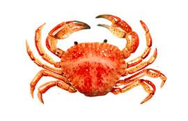 Red Crab, Karolina Kijak H&M