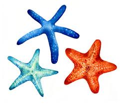 starfish, Karolina Kijak H&M