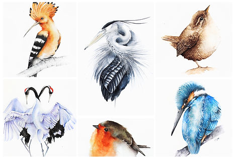 wildlife pintings and watrcolours