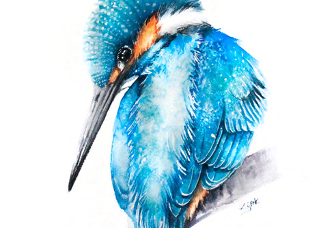 Kingfisher | Alcedo atthis | Zimorodek