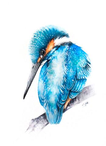 Kingfisher | Zimorodek 03