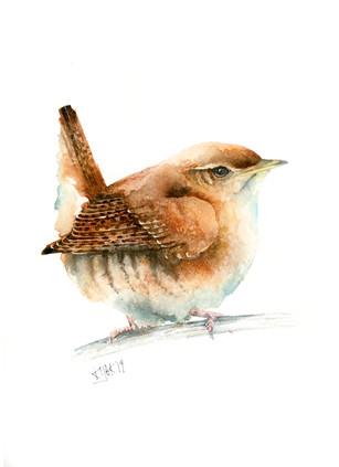 Wren, watercolour painting, size 20x30cm