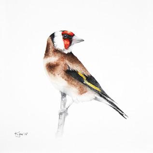 Goldenfinch, watercolour painting, size 20x30cm | Szczygieł, obraz akwarela w rozmiarze 20x30cm