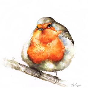 Rudzik   Robin