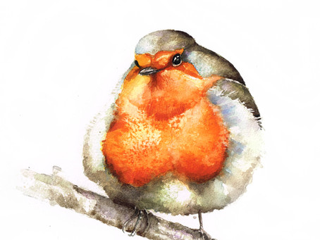 Rudzik | Robin