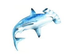 Hammerhead shark 2 , Karolina Kijak H&M