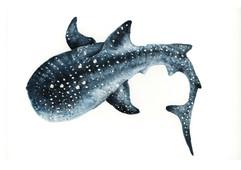 Whale Shark, Karolina Kijak H&M