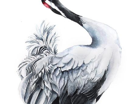 Żuraw zwyczajny | Common Crane