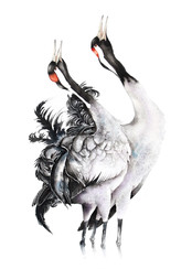 Common Crane | Żuraw 01