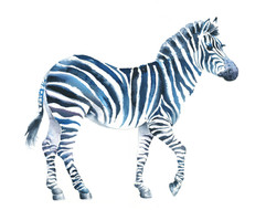 A1_Zebra_4.jpg