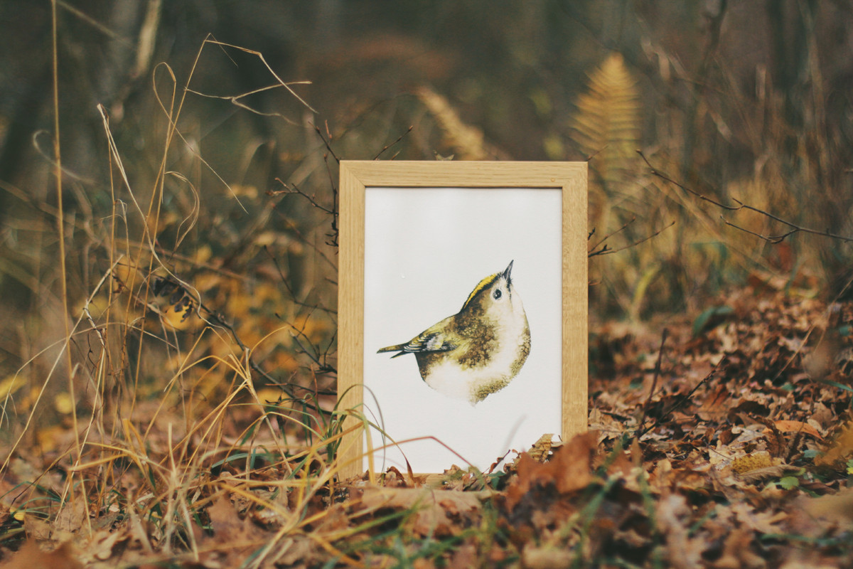 Framed watercolor wren