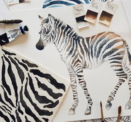 watercolor zebra, Karolina Kijak H&M