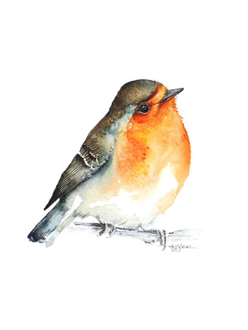 Robin | Rudzik 02