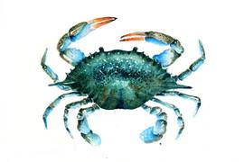 A9_crab_2.jpg