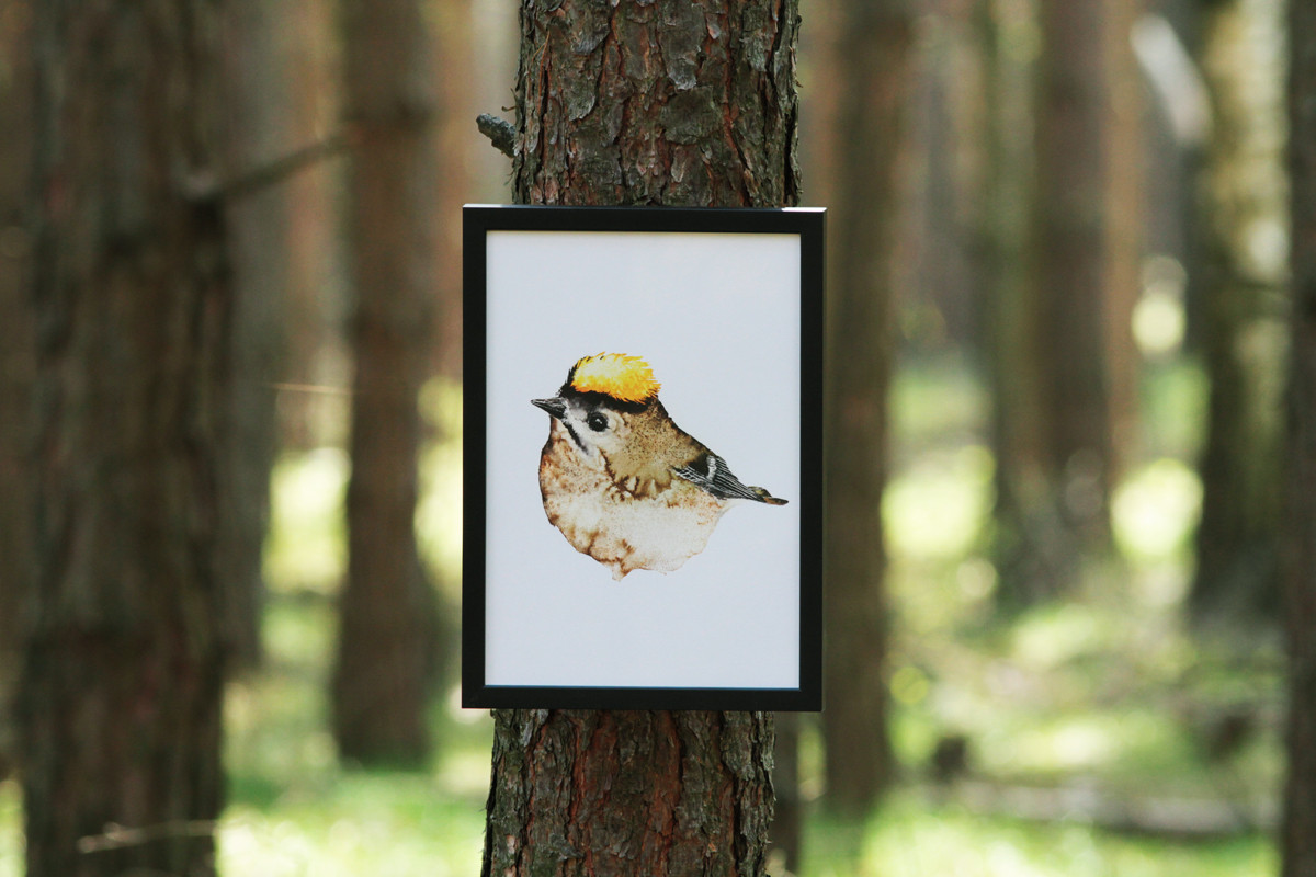 Framed watercolor goldcrest 2