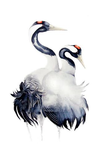 Common Crane | Żuraw 02