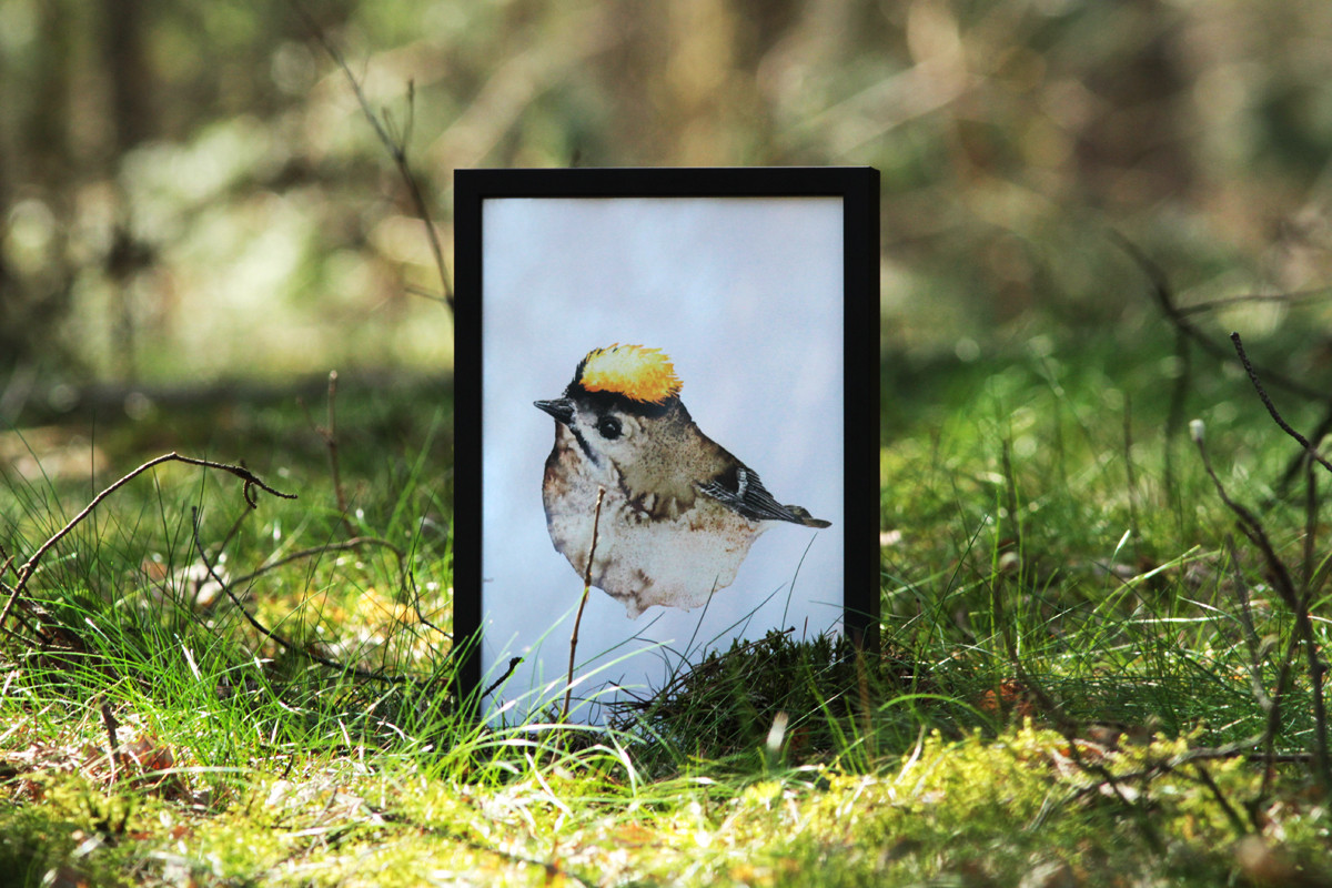 Framed watercolor goldcrest