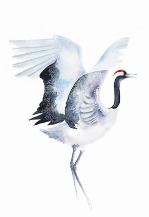 Red Crowned Crane I, watercolour painting 50x70cm | Żurawie japońskie I, obraz akwarelowy 50x70cm