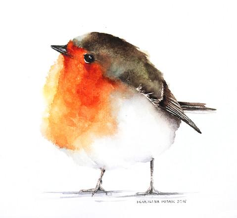 Robin | Rudzik 03