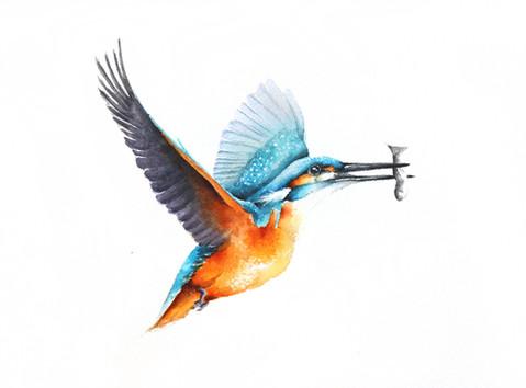 Kingfisher | Zimorodek 04