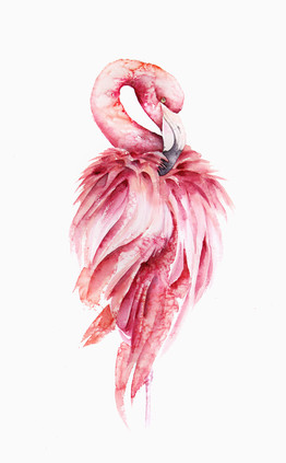 Pink Flamingo, watercolour painting, size 37x58cm