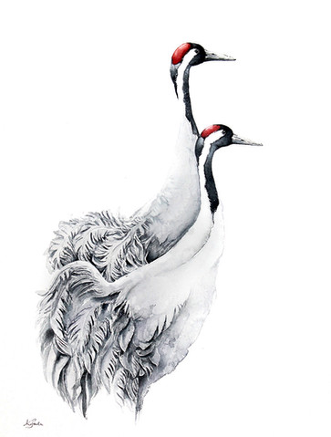 Common Crane | Żuraw 04