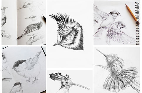 sketchbook with wildlife drawing