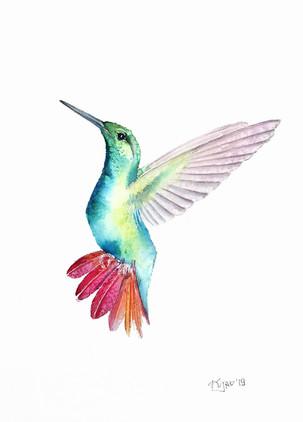 Hummingbird 2, watercolour painting, size 20x30cm | Koliber w locie 2, obraz akwarela w rozmiarze 20x30cm