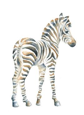 A1_Zebra_2.jpg