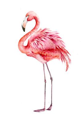 Pink Flamingo, Karolina Kijak H&M