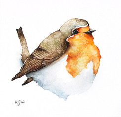 Robin | Rudzik 05