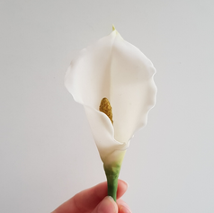 Cold porcelain calla lily