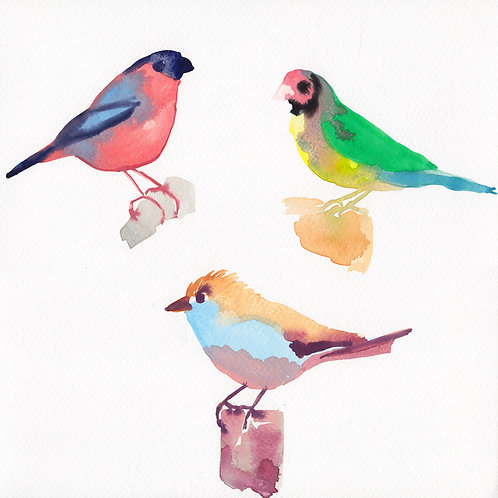 Bird Trio Watercolour Painting by Suzie Cumming