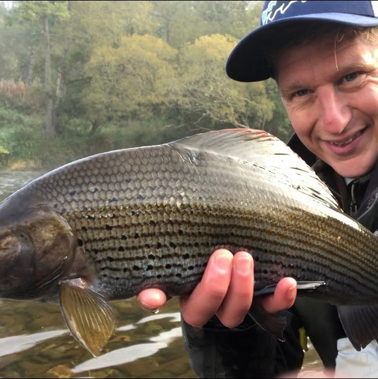 Tweed Grayling