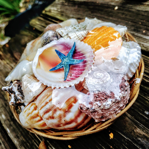 Florida seashell basket