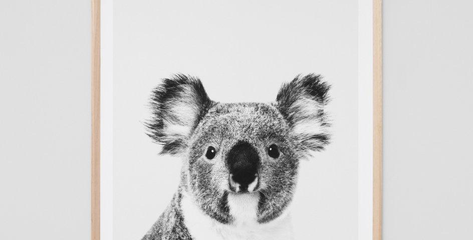 Koala Portrait - In store pickup only!