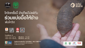 """""""เครือซีพี""""จับมือสมาคมสหพันธ์ช้างไทย คิกออฟโครงการ """"คนไทยรักช้าง""""ระดมสรรพกำลังบ.ในเครือ ร่วมด้วยช่วย"""