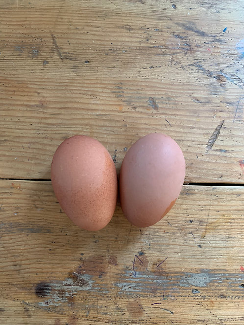 Lavender Marans Hatching Eggs